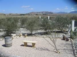 Omheinde tuin met olijfbomen