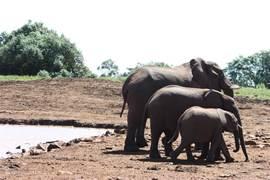 Olifanten in De Aberdares, 1 uur rijden