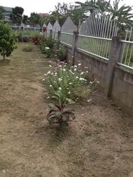 Voortuin voorzien van diverse planten en bloemen.