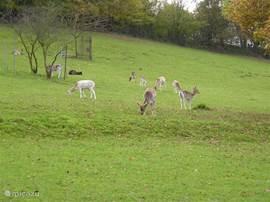 In Wildpark Knüll genieten van loslopende herten en natuurgroen. In het nabijgelegen Kircheim is een leuke mini-zoo / kinderboerderij aanwezig.