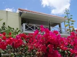 Sunrise 8. Kindvriendelijk Luxe appartement op de 1ste verdieping met uitzicht op gedeeld privé zwembad en de Caribische Zee.
