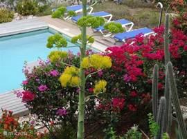 Douche bij het zwembad. Het zwembad wordt wekelijks schoongemaakt. In het hoogseizoen zelfs enkele keren per week.