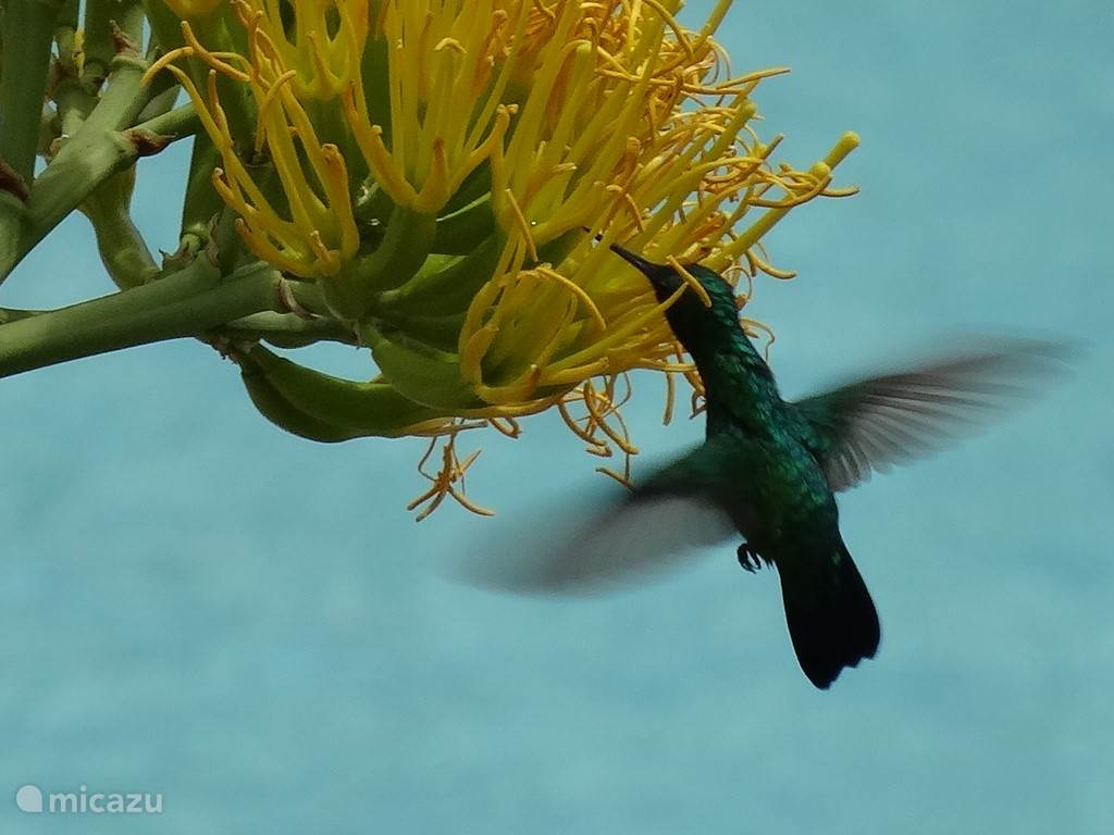 Veel kolibrietjes.