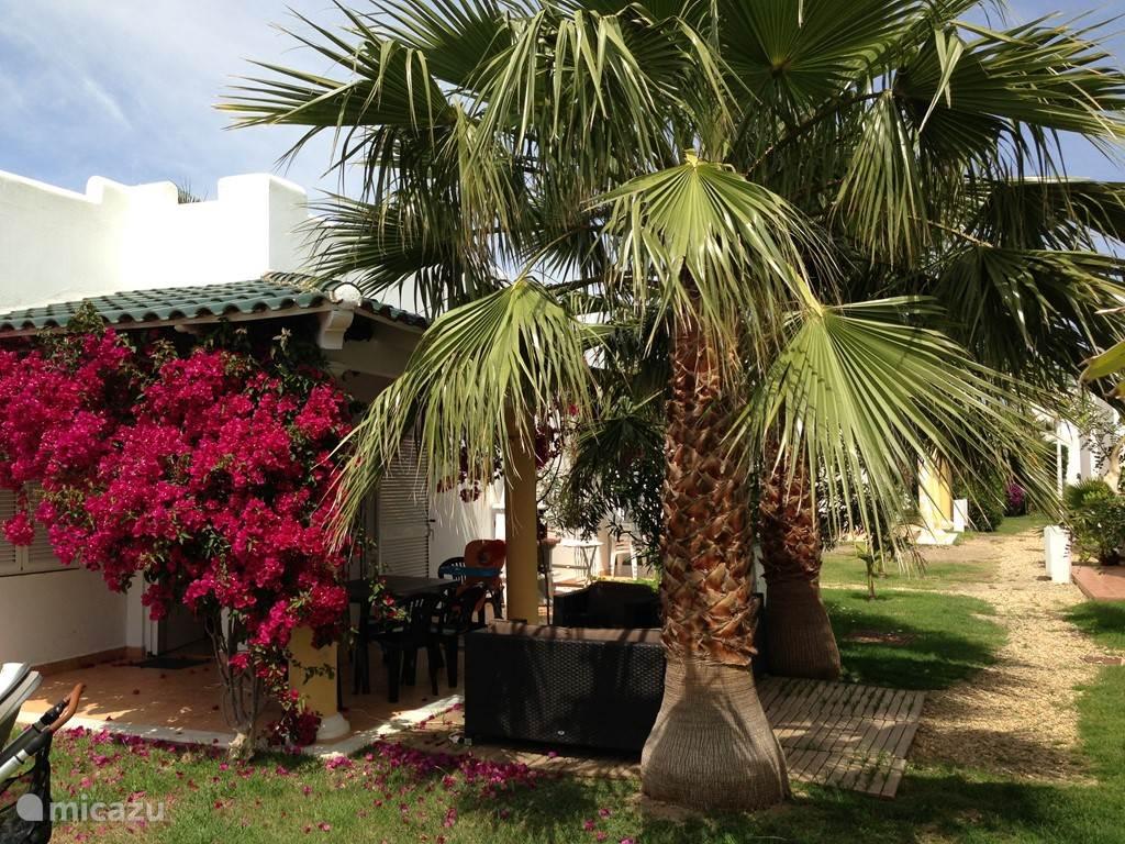 Zijaangezicht met veranda , voordeur , terras en palmen.