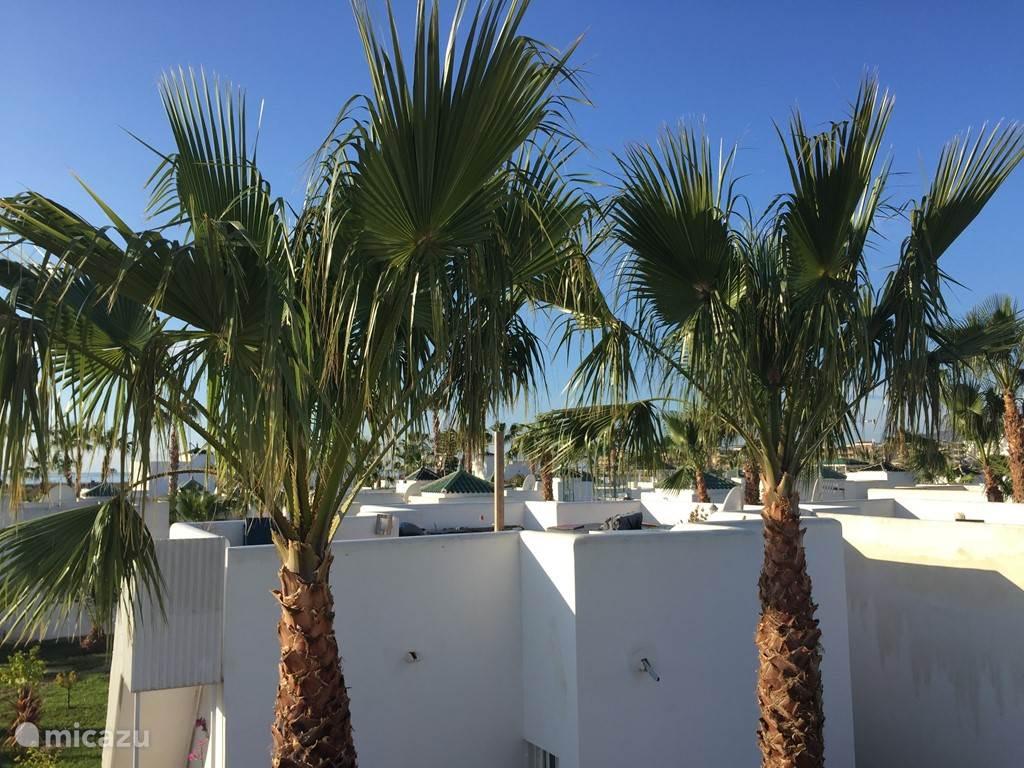 De palmen vanaf het dakterras gezien richting het strand , op 200 meter lopen.
