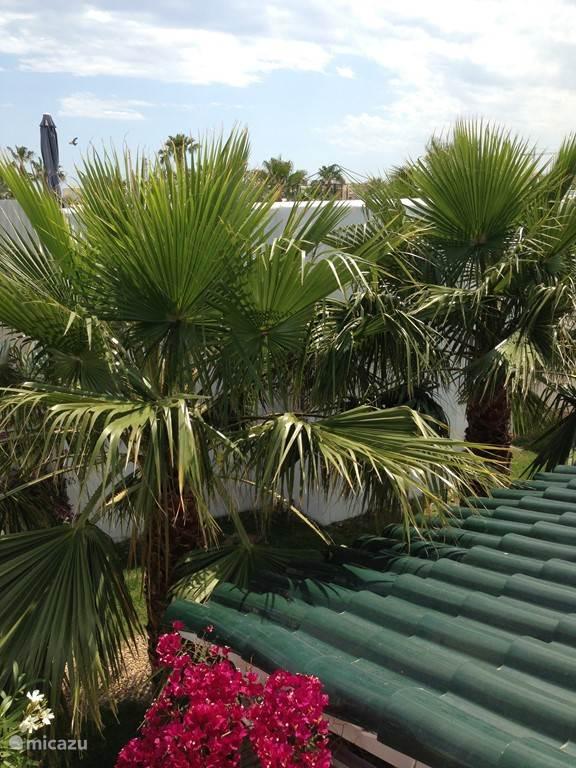 Nogmaals de palmen maar nu een jaartje geleden nog.
