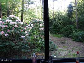 Uitzicht op de tuin vanuit de keuken.