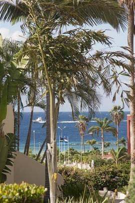 Eed doorkijkje door de palmentuin van het Royal Palm Resort.
