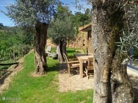 Via de royale schuifpui komt u op het terras vanwaar u ook geniet van het adembenemende uitzicht. De eeuwenoude olijfbomen bieden voldoende schaduw. Aansluitend aan het terras kunt u heerlijk afkoelen in de privé loungepool.