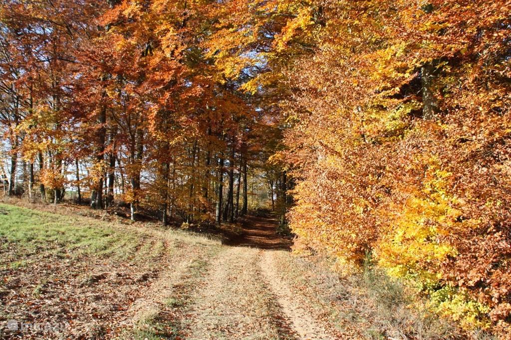 Mooie herfstkleuren in de Hunsrück