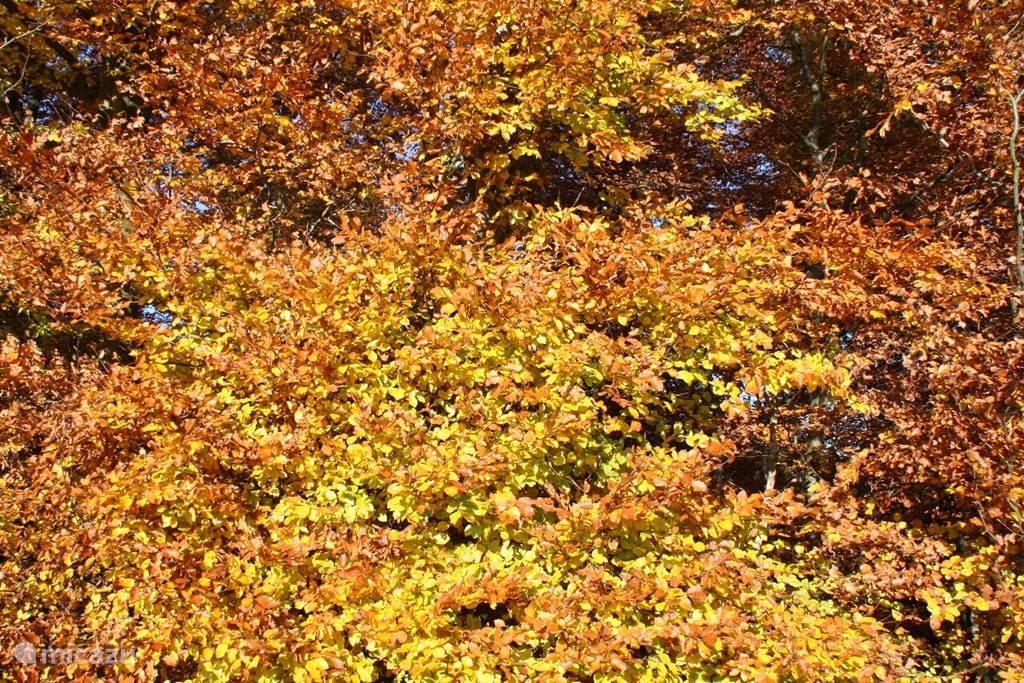 Herfst in de Hunsrück