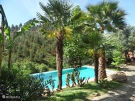 Het zwembad voor de gasten van Quinta dos Moinhos