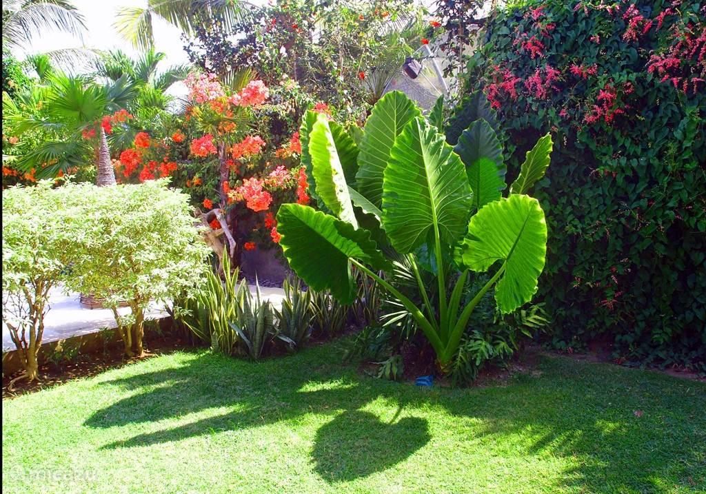 Tropische tuin Villa Mahkai