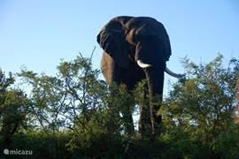 Olifanten bekijken van zo dichtbij!