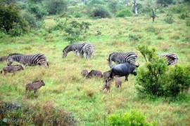 Wilde dieren van dichtbij bekijken!