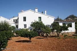 Aanzicht achterkant. Het huis heeft verschillende fruitbomen, zoals appel, peer, sinaasappel, avocado, citroen, kers, nisperos, grapefruits en een zeer grote vijgenboom.