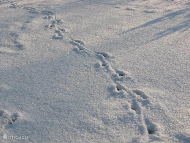 Tja, van welk dier zouden deze sporen zijn?