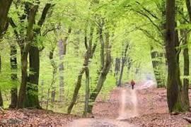 De Veluwe: alle seizoenen mooi.