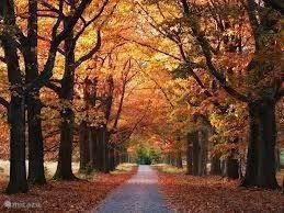 Genieten van de kleurenpracht in de herfst.