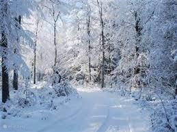 De winterse bossen op de Veluwe.