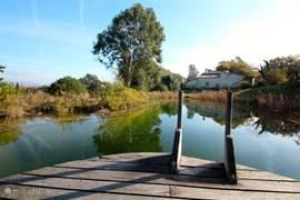 Het natuurzwembad  van 15m x 22m. met in de zomer een gemiddelde temperatuur tussen de 22 en 28 graden C. Dit zwembad is, evenals de wijngaard, geheel biologisch dus zonder gebruik van chemicaliën!