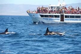 Activiteiten in de buurt: Whale and Dolphin watching (straat van Gibraltar is een belangrijke migratie route)