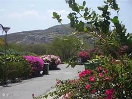 Het Piscadera Bay Resort is een rustig privé park met bungalows die voor het merendeel permanent bewoond zijn door hardwerkende eilandbewoners. Een deel van de huizen wordt in periodes verhuurd aan toeristen die op hun rustige plek hun vakantie willen doorbrengen. Het park iligt op een top locatie,