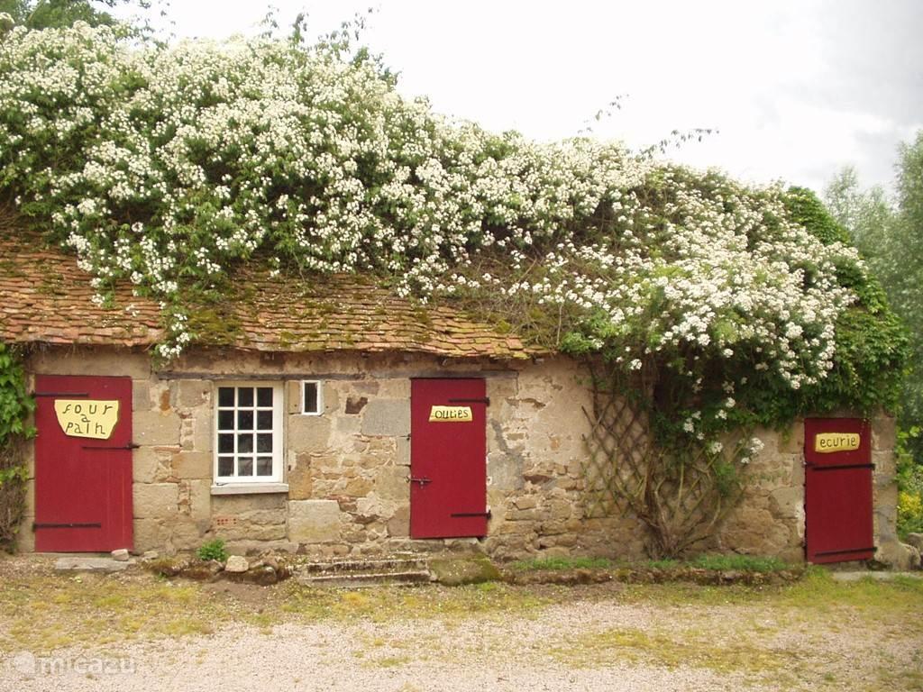 Geurende rozen Kliftscate en Weddingday over de bakkerij