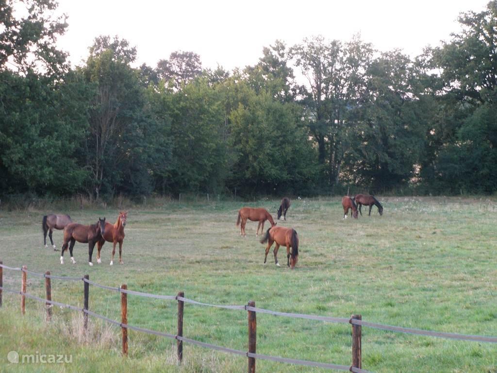 Groep paarden op Domein.