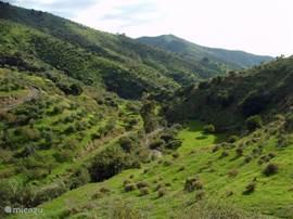 De natuur in de Axarquía.