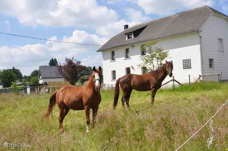Vakantiehuis België, Ardennen, Amel Landhuis / Kasteel op de Kalverhof