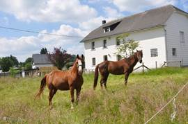 our horses for the home