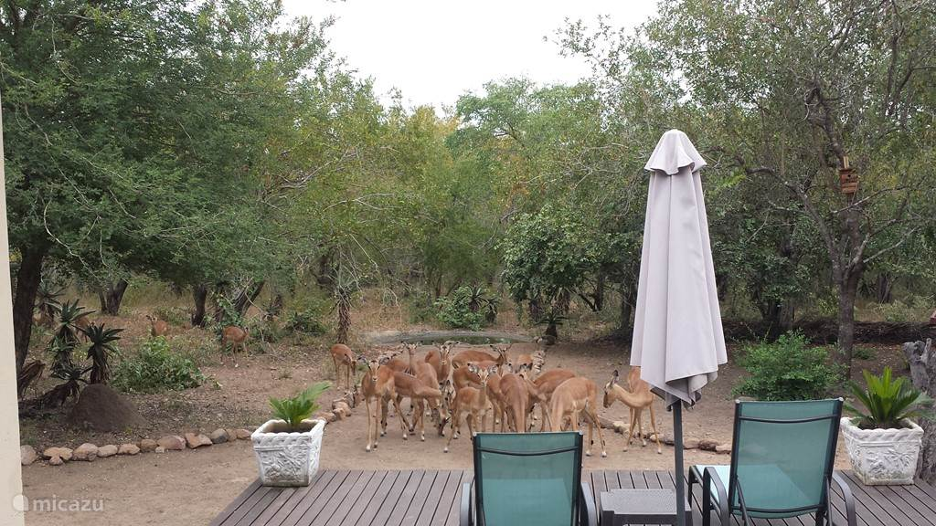 Groepje Impala's
