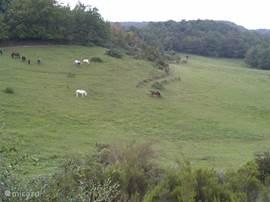 De paarden zorgen dat het gras niet te hoog wordt