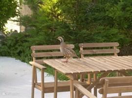 Soms komt de natuur bij je aan tafel zitten. Of er op!