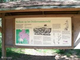 Natuurgebied Doldersummerveld