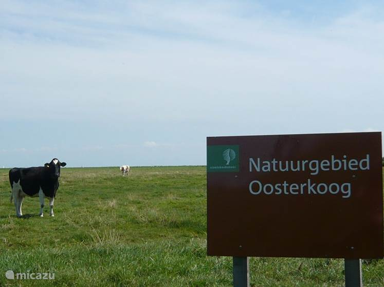 Oosterkoog