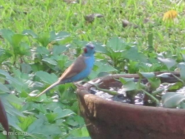 In de tuin waar veel waterpotten staan , voor de vogels