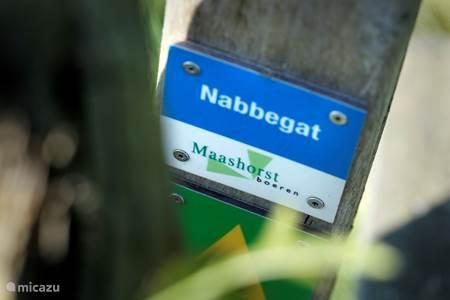Natuurgebied De Maashorst