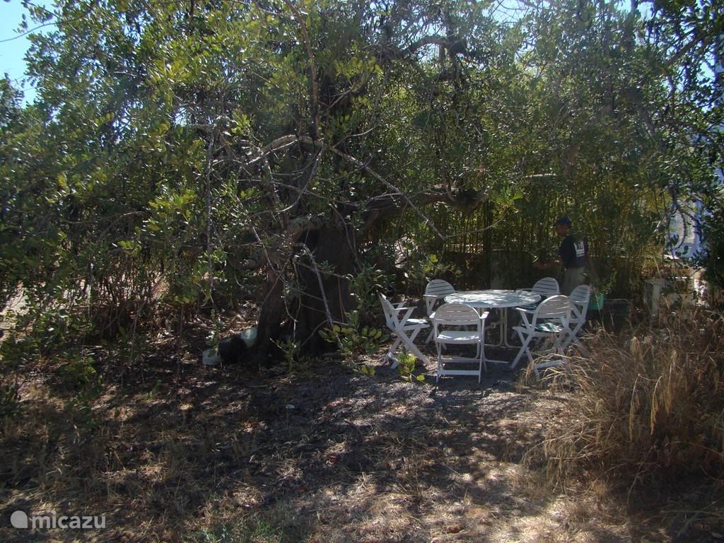 Nog een ander privé terras In de schaduw onder de carob boom