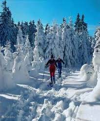 Prefer cross country skiing in this beautiful environment ...................
