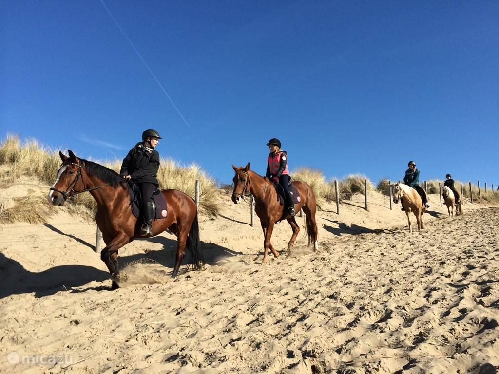 Paardrijden op het Noordwijkse strand