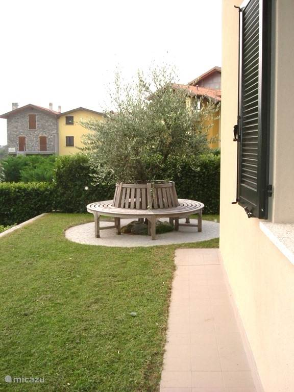 Olive tree with teak tree bench on the east side of the apartment.