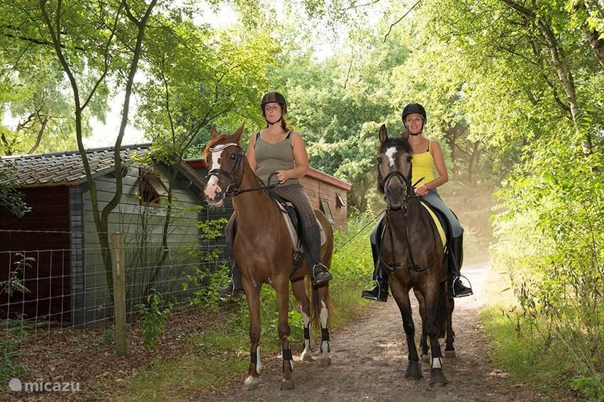 Manege op loopafstand, u kunt hier ook uw eigen paard stallen.