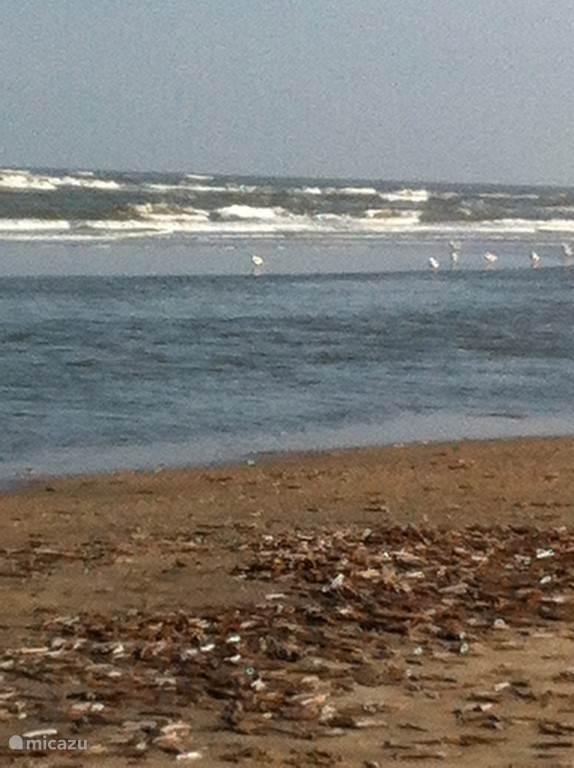 Het strand en de zee: altijd fascinerend!