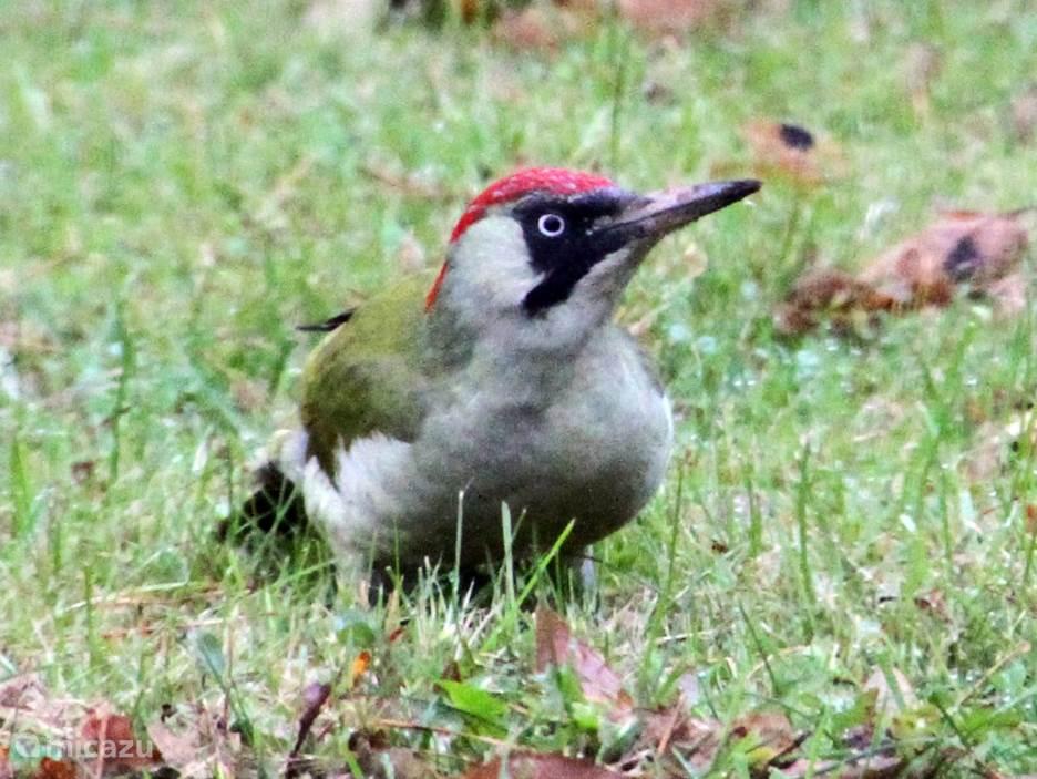 Grote variëteit aan vogeltjes op eigen terrein