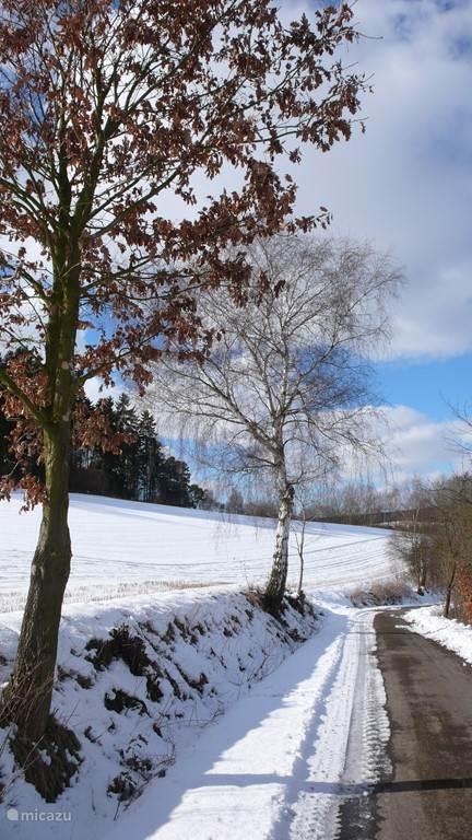 Wandeling in de sneeuw op maar een paar honderd meter van ons huisje.