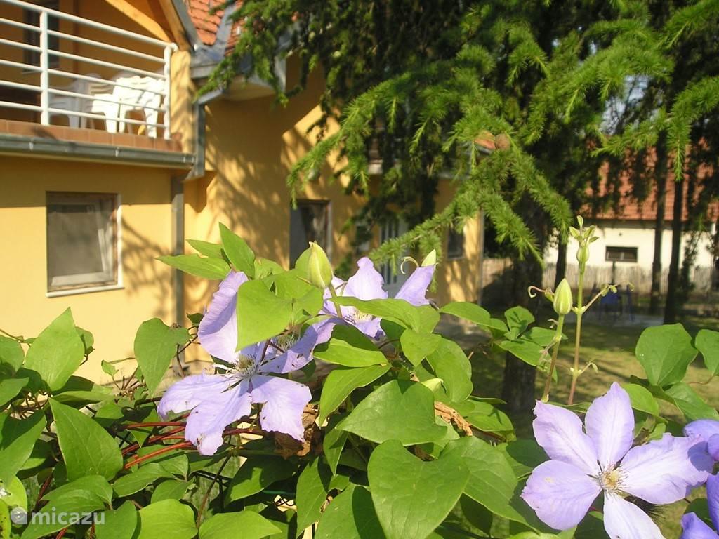 Er klimt een mooie plant met bloemen doorheen de omheining.