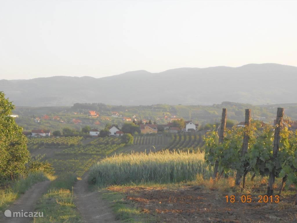 Villa Vinca bevindt zich in de verte in het midden. Op de voorgrond zijn er meerdere wijngaarden... Achteraan is er het Rudnik wandel-gebergte.