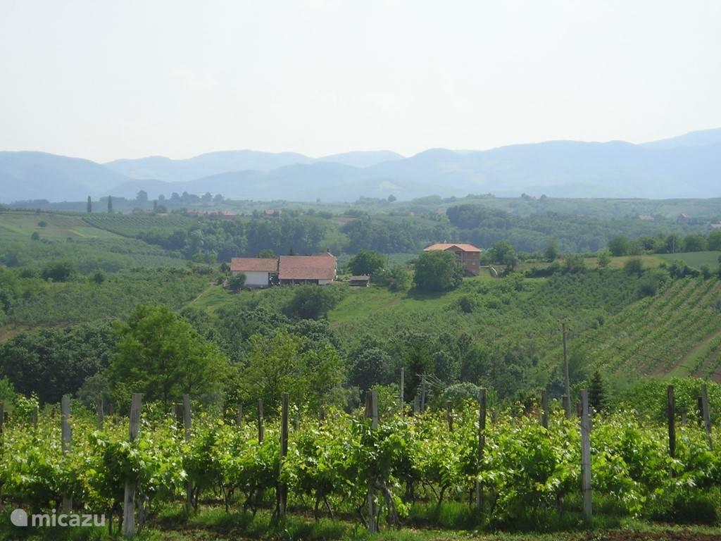 ...het mini-Toscane van Servië... De fruit-plantages en de heuvels rondom Villa Vinca...